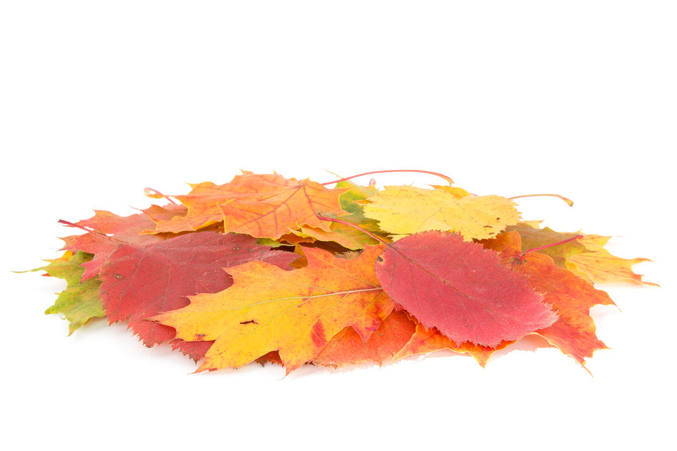 Calgary Fall Cleanup Services